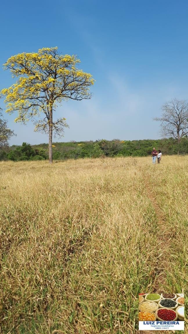 fazenda a venda de 906 alqueirões em araguaçu - to (dupla aptidão) - 1316