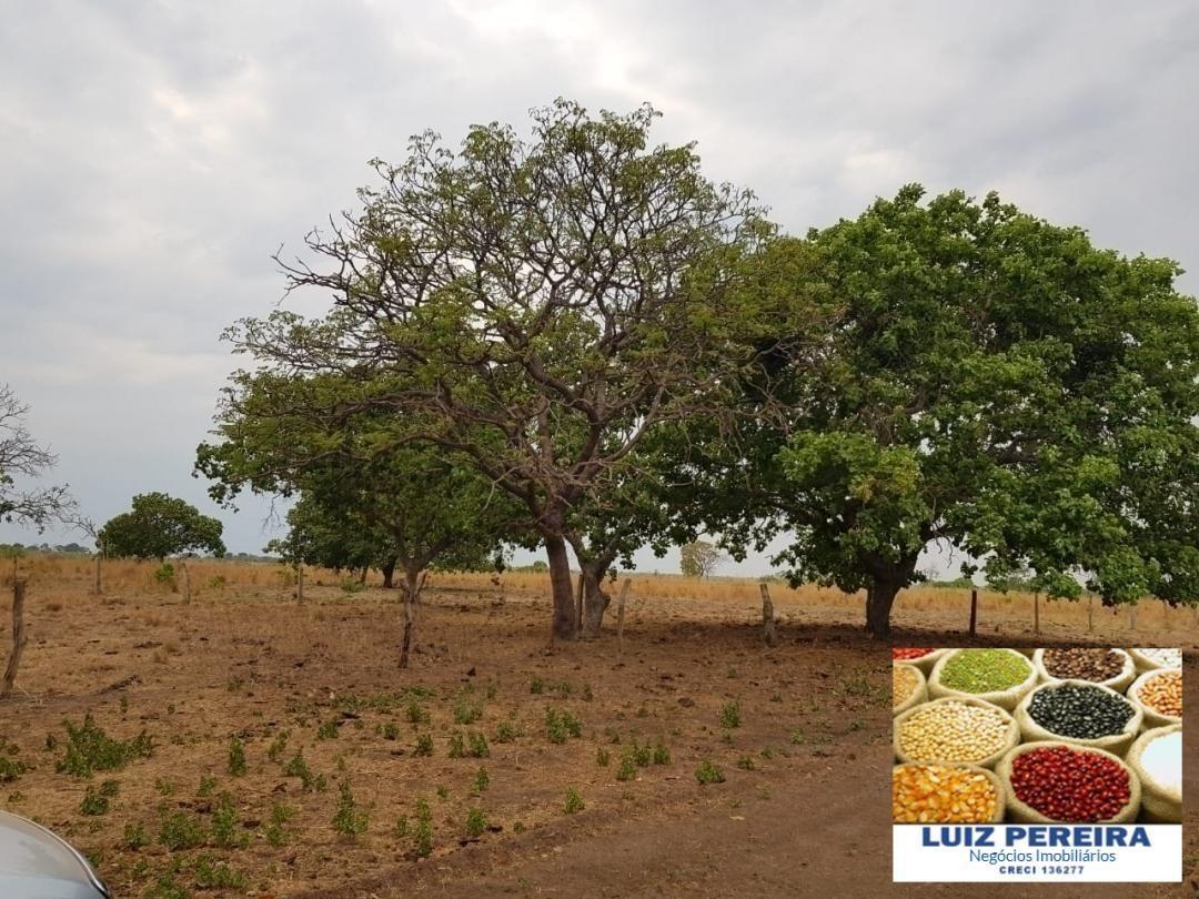 fazenda a venda  dupla aptidão de 231 alqueirões  em figueirópolis -to - 912