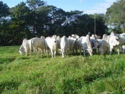 fazenda a venda em aquidauana - ms (pecuária) - 883