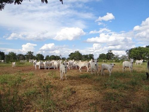 fazenda a venda em campo grande - ms (pecuária) - 763
