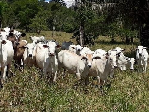 fazenda a venda em coxim - ms (pecuária) - 1168