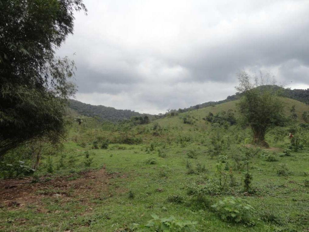 fazenda a venda em miracatu-sp - 1362