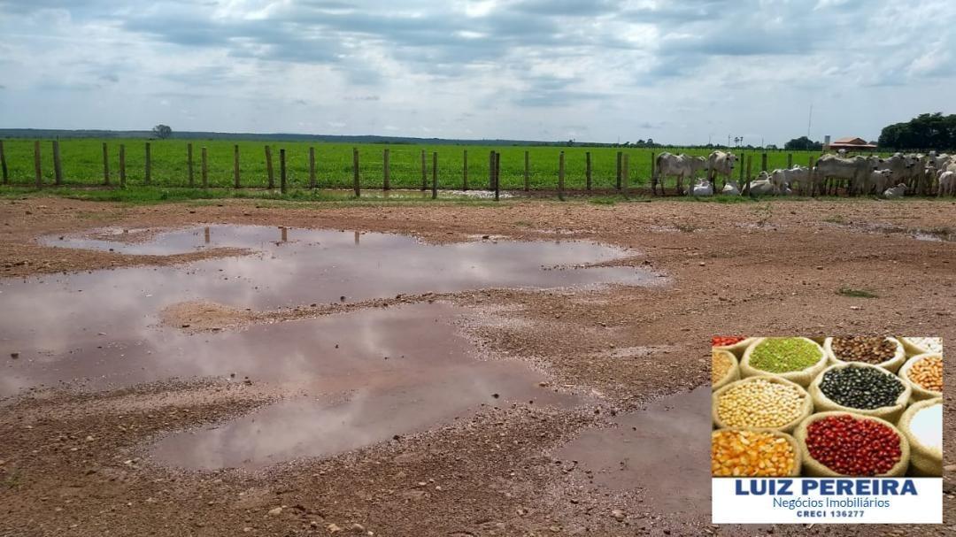 fazenda a venda em peixe - to - de 4.000 hectares  (dupla aptidão) - 1242