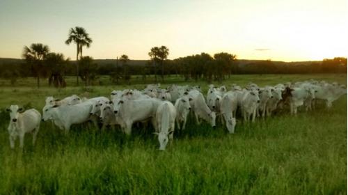 fazenda a venda em riachinho- mg  ( pecuária ) - 574