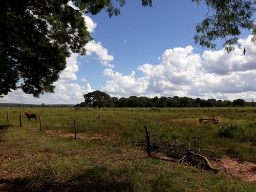 fazenda a venda em ribas do rio pardo - ms (pecuária) - 1090