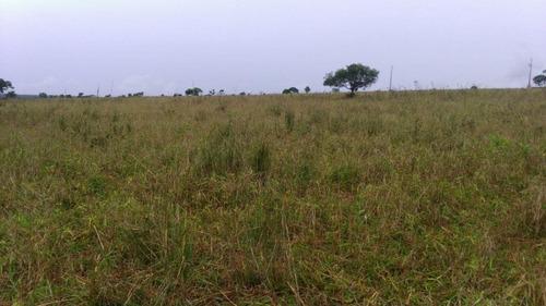 fazenda a venda em ribas do rio pardo - ms (pecuária) - 964