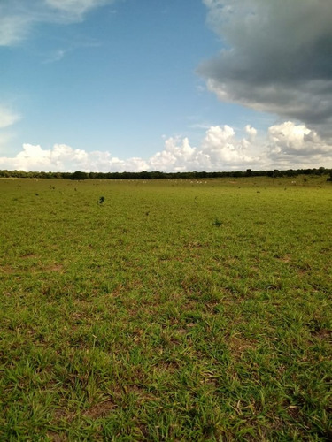 fazenda a venda em rio verde - ms(pecuária) - 1071