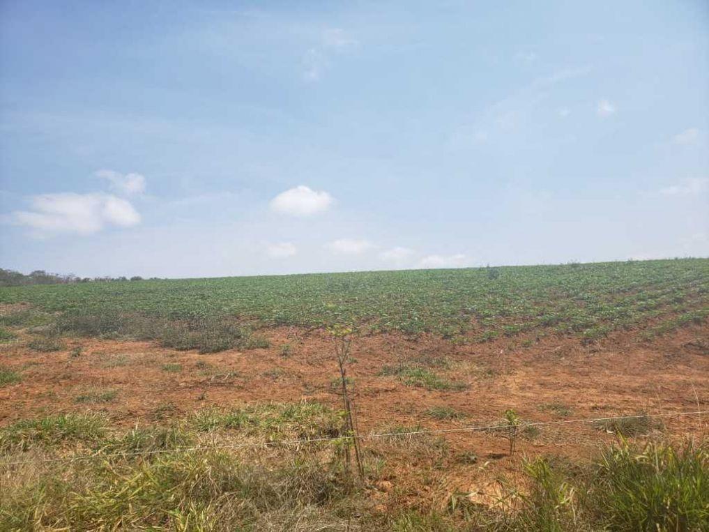 fazenda a venda em são vicente de minas-mg - 1357
