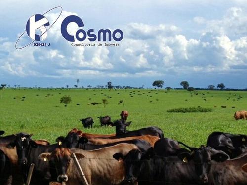 fazenda, a venda,   em sorriso -mt - fa00069 - 33543200