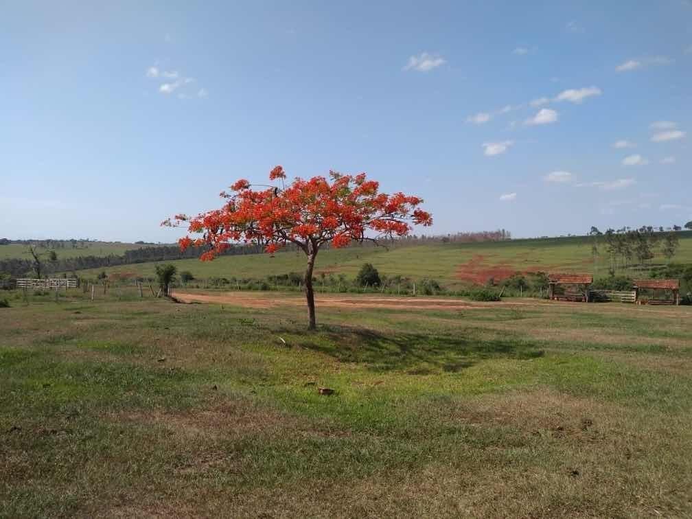fazenda alto paraíso - pr