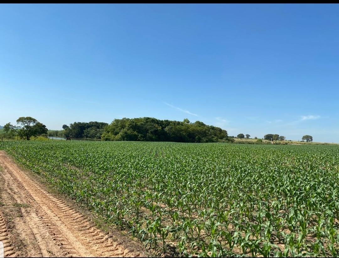 fazenda araçatuba