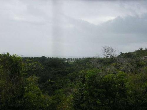 fazenda área total de 52,5 hectares em boipeba/ ba - ref: 40