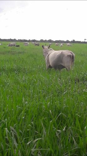 fazenda barra dos garcas 6.000 hectares