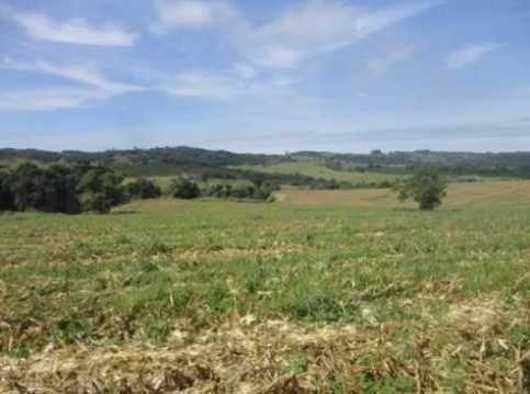 fazenda com 134 alqueires em espírito santo do pinhal - 1066
