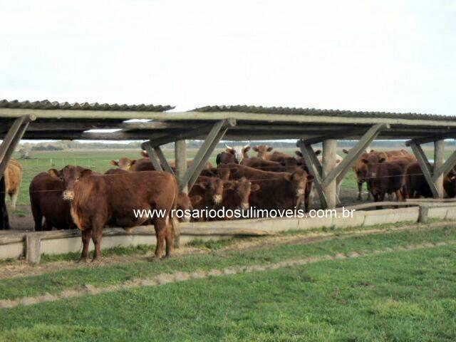 fazenda com 1650 hectares com porteira fechada em tavares-rs
