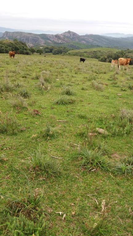 fazenda com 2 dormitórios à venda, 4100000 m² por r$ 2.870.000 - centro - caçapava do sul/rs - fa0007