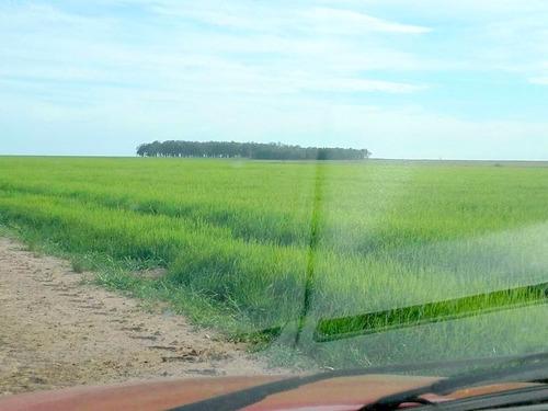 fazenda com 3000 hectares para arroz e soja em são borja-rs