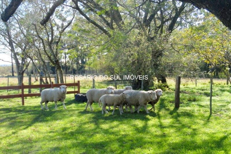 fazenda com 600 hectares em alegrete - rs
