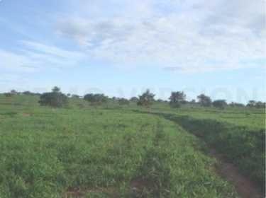 fazenda com 655 hectares em joão pinheiro - 7444