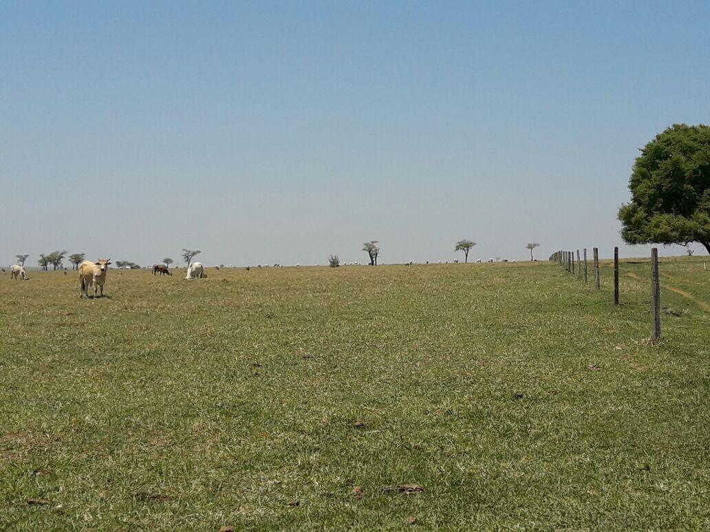 fazenda de 2520hec estrutura pecuaria em goias (6039)