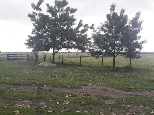 fazenda de 30 ha (trinta hectares) a 3km do centro - fz1322v