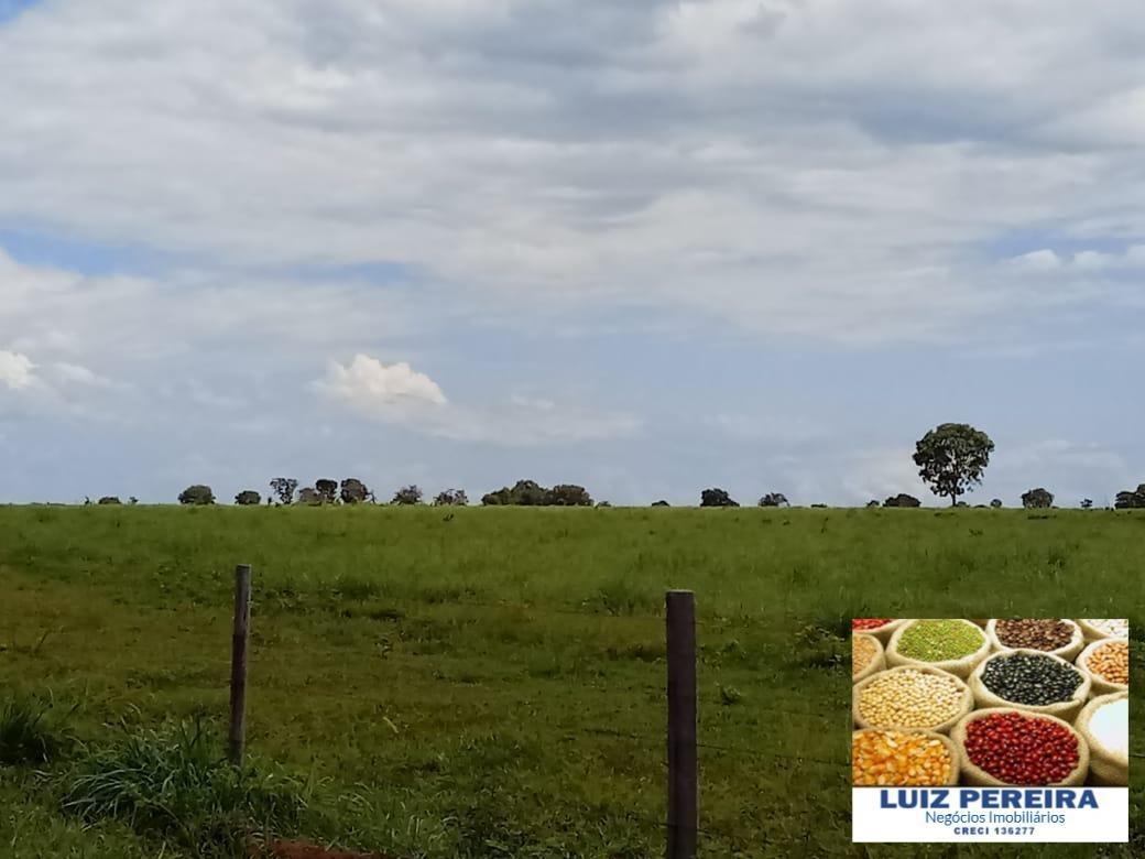 fazenda de 563 alqueirões em araguaçu -to (dupla aptidão) - 1307