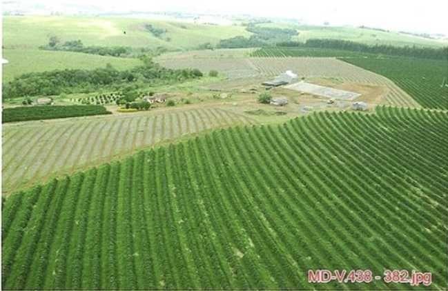 fazenda de café e eucalipto com 54 hectares em são joão del rei - 1032