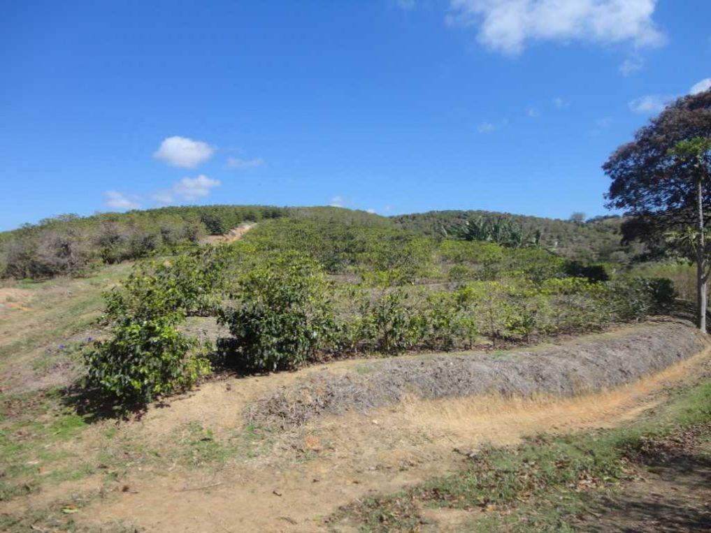 fazenda de café em monte sião-mg - 1264