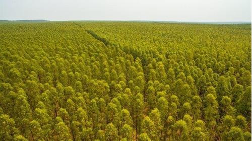 fazenda de eucaliptos produtiva para venda -cód fa-051