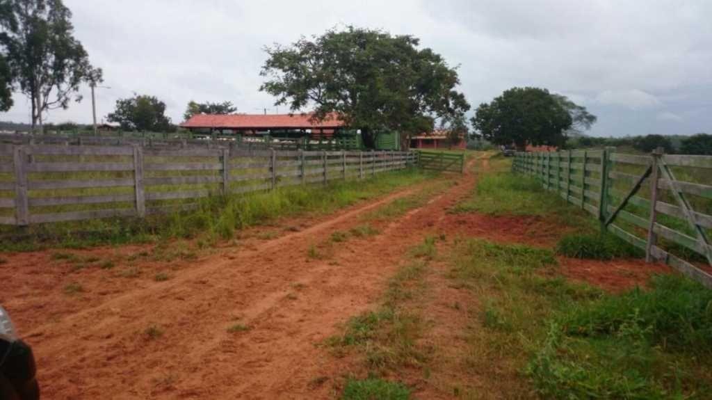 fazenda  de gado   joão pinheiro mg - 7543