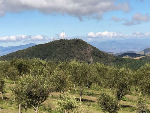 fazenda de oliveiras em cristina-mg - 1268