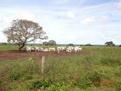 fazenda em cariri - to, dupla aptidão  - 257