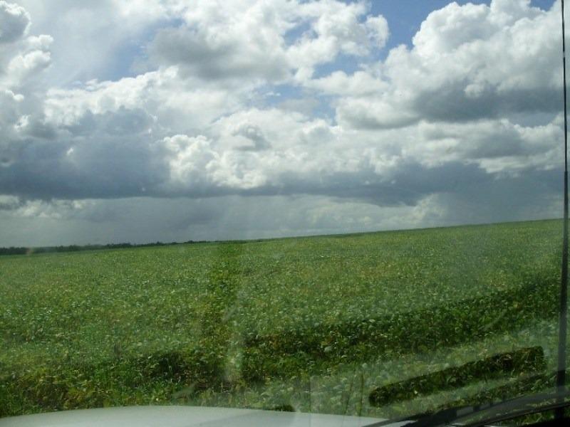 fazenda em município de campo novo do parecis - mt - fa0029 - 3353286