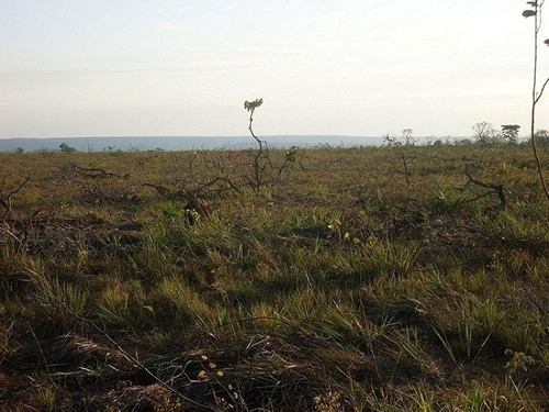 fazenda em nova brasilândia - mt, p/ agricultura  - 324