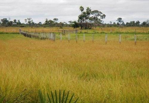 fazenda em poconé - mt, pastagens p/ 30.000 cabeças - 277
