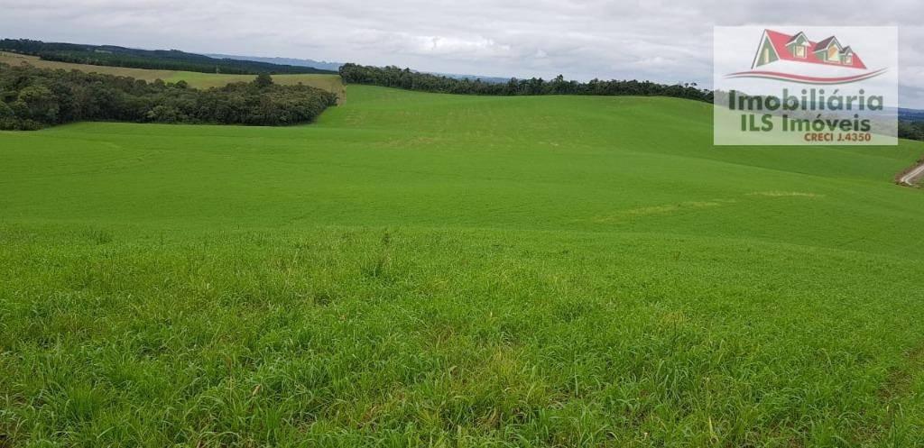 fazenda no antonio olinto - fa0014