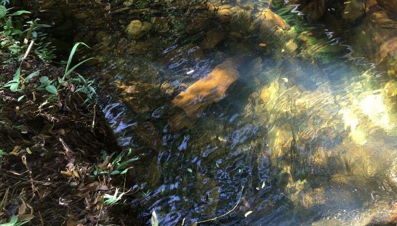 fazenda no sul de minas , dentro circuíto das águas , cidade de baependi , com 37  ha , 1300 metros de altitude , boa de água, área para oliveira ( produção azeite). - 237