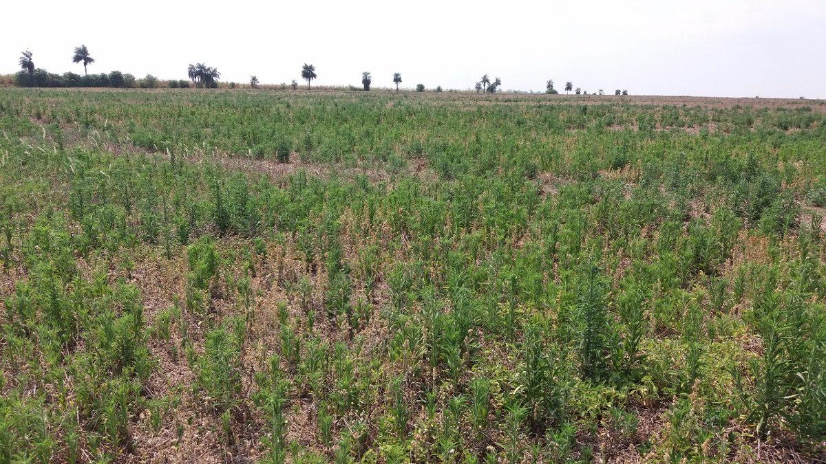 fazenda para agropecuária venda  - camapuã / ms    fa-080