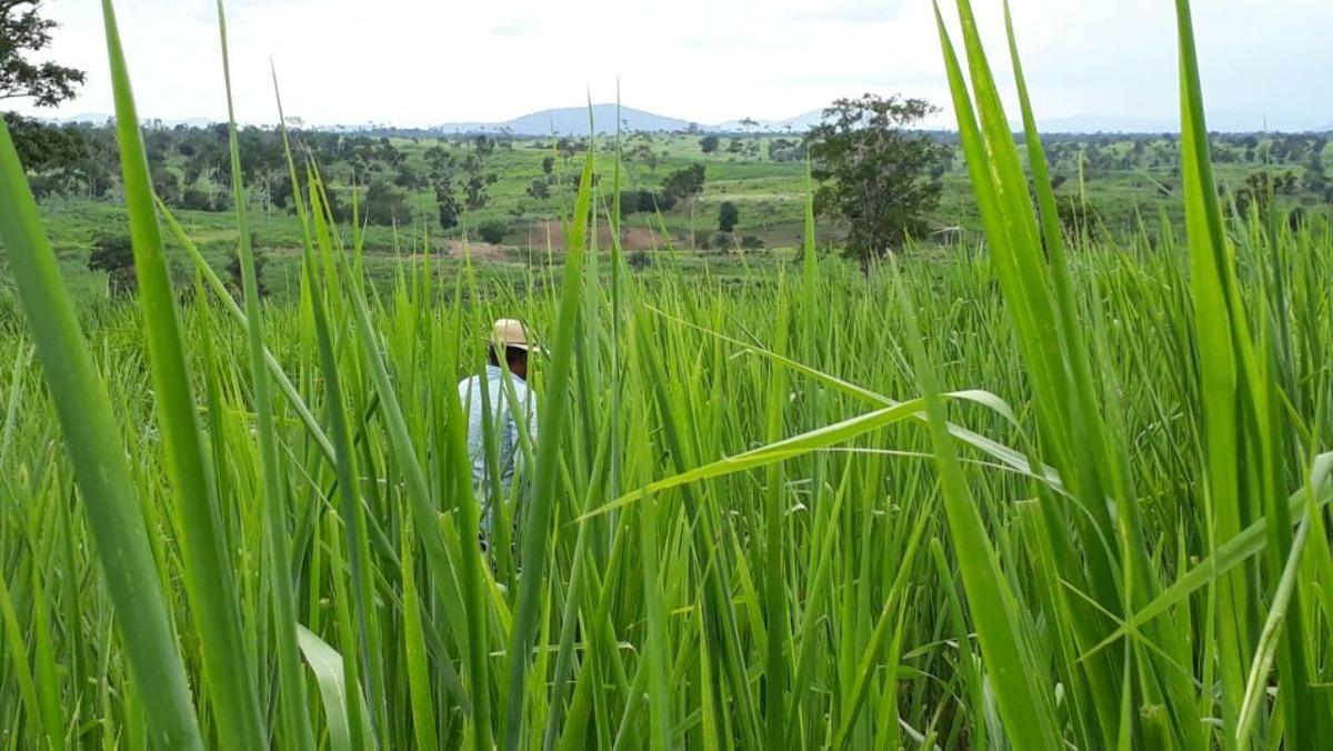 fazenda para comprar no zona rural em itaju do colônia/ba - 467