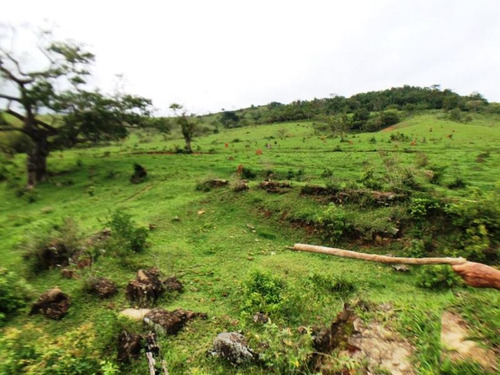 fazenda para comprar no zona rural em nepomuceno/mg - nep843