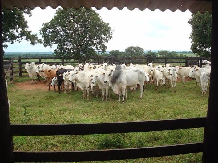 fazenda para criação de gado  com 1.426 hectares em ms. 481