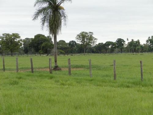 fazenda para venda em corumbá, centro - 1006
