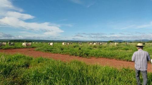 fazenda para venda em terenos, centro - 1008