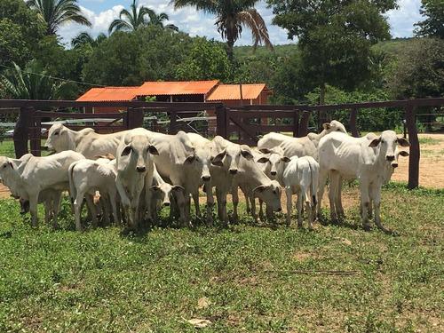 fazenda parcelada financiada r$1875,00 mensais.