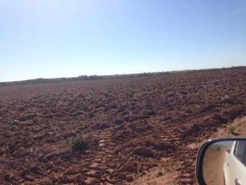 fazenda pecuaria ou lavoura  em nova brasilandia-mt (4116)