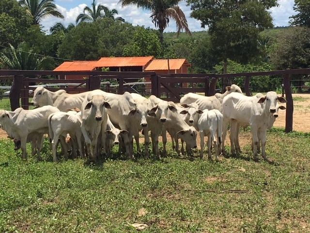 fazenda prazo r$ 1.875,00 mensal
