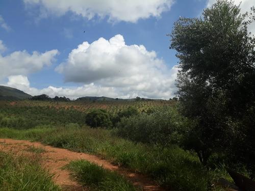 fazenda produtiva , com oliveira , visando produção de azeite , tem também café , milho ,fica no município de  aiuruoca no sul de minas , com 175 hectares. - 509