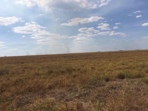 fazenda região mato grosso