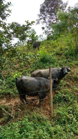 fazenda rural à venda, bela vista, barra do turvo. - fa0135