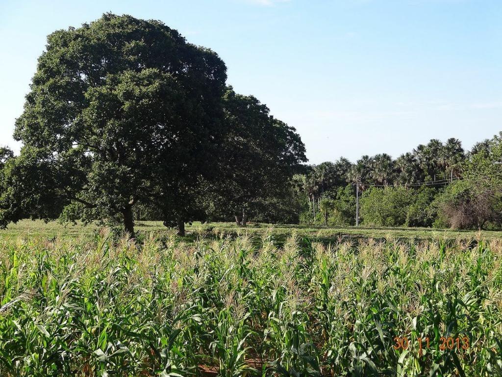 fazenda rural à venda, zona rural, campo grande. - fa0219